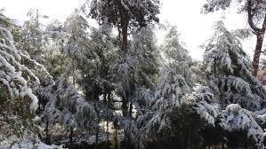 snow falling on cedars essay snow falling on cedars essaysnow falling on cedars essay write admission essay