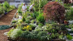 gardening could be the hobby that helps