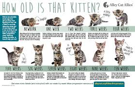 Kitten Size Chart How Old Is A Kitten Kitten Progression How To Tell Alley