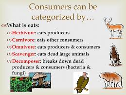 Unit 4: Ecology Vocab Remember to do a Vocab Menu Option! - ppt ...