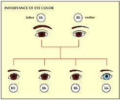 Eye Dominance Chart 38 Uncommon Dominant Recessive Gene Chart