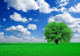 green grass blue sky.  Green Green Grass Blue Sky Free Stock Photos Download 23273 Free Photos  For Commercial Use Format HD High Resolution Jpg Images To Grass Blue Sky
