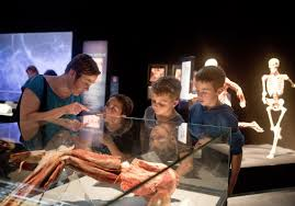 Light Rx Indianapolis Body Worlds Rx Brings The Human Body To New Light At