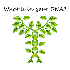Green Chart Dna Got Dna Now What Topeka Shawnee County Public Library