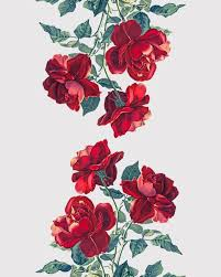 Small Picture Best 20 Rose illustration ideas on Pinterest Rose design How