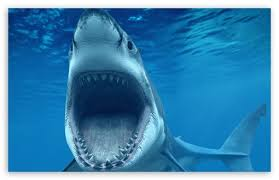 shark attack wallpaper. Interesting Shark Download Shark Attack Underwater HD Wallpaper With W