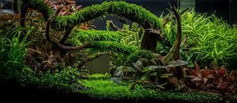 Planted Aquarium Wallpaper Planted Aquarium Gallery Green Leaf