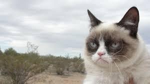 grumpy cat wallpapers 7 3840 x 2160