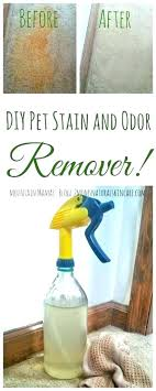 remove dog urine stain from carpet pet remover and odor cat how do you old