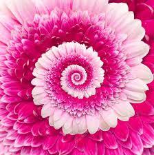 """Résultat de recherche d'images pour """"pétales fleurs fibonacci"""""""
