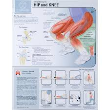 Strengthening The Hip And Knee Chart Laminated