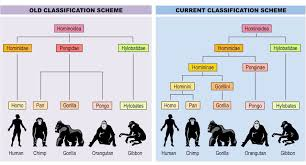 Classification Bioninja