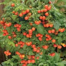 container gardening for beginners. How To Maintain Container Vegetable Gardening In Your Apartment For Beginners