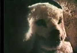 santa claus conquers the martians polar bear. Unique Polar It Features An Extraordinary Polar Bear Throughout Santa Claus Conquers The Martians Polar Bear H