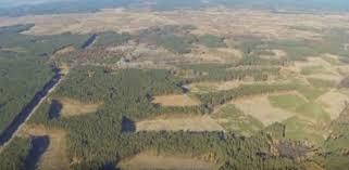 Картинки по запросу вырубленные леса сибири