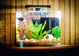 fish tank decor ideas ides for house decoration decorations . fish tank  decor ideas ...