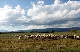 Αποτέλεσμα εικόνας για εκπαιδευση κτηνοτροφων