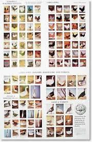Domestic Duck Breeds Chart Pinterest