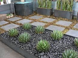 backyard succulent garden