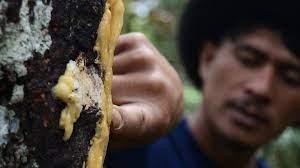 Damar adalah salah satu hasil hutan non kayu yang sudah lama dikenal, yaitu suatu getah yang merupakan senyawa. Menilik Potensi Kemenyan Di Sumatera Utara