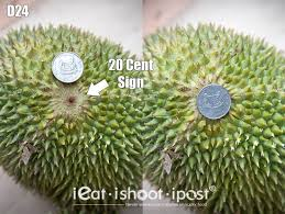 Image result for d24 durian