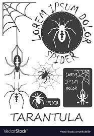 Tarantula Web Design Set Of Vintage Spider Labels Badges And Design