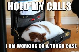 Image result for working cat meme