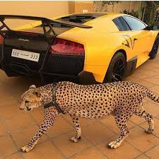 Luxury cars guns and cheetahs for pets The Rich Kids of Saudi