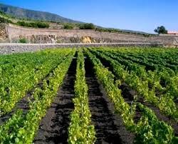 Сельское хозяйство Испании Все страны мира Сельское хозяйство Испании