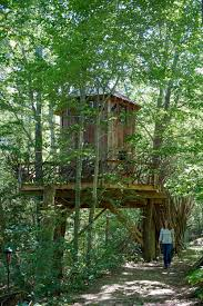 treehouse masters. DSC_2582.jpg Treehouse Masters