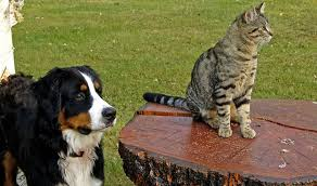 dogs and cats mating together.  Cats In Dogs And Cats Mating Together R
