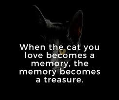 Loss Of A Cat Quotes Simple Quotes About Cat Death For You To Kiss Away The Pain EnkiQuotes