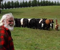 unique cattle australian belted galloway ociation member john blackwood looks out on a field of