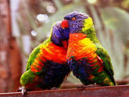 hdq love birds wallpapers background id 4721304