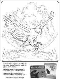 Small Picture American Bald Eagle Bald eagle Worksheets and Symbols