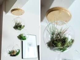 air plant terrarium diy tutorial how to make a hanging terrarium diy hanging air plant terrarium