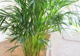 Full Size of Plant:indoor House Plants Excellent Beautiful House Plants 9  Beautiful House Plants ...