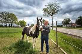 Paard Gestorven Maar Awv Kapt Giftige Esdoorns Voorlopig Bree