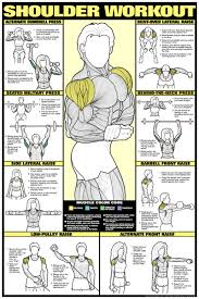 16 Shoulders Guys Muscle Charts Fitness Exercise Chart Hd