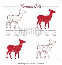 Deer Butcher Chart Venison Meat Cut Vector Photo Free Trial Bigstock