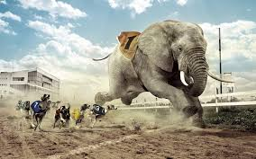 Elephant Hd Wallpapers Free Download ...
