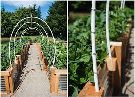 diy vegetable garden trellis using pvc