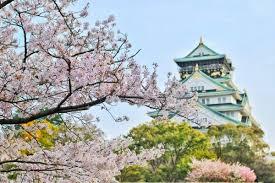 Bunga Sakura 7 Tempat Terbaik Untuk Melihat Bunga Sakura Mekar Di Tokyo