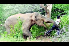 Image result for dangerous elephants