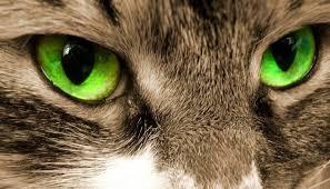 Резултат со слика за cats eye
