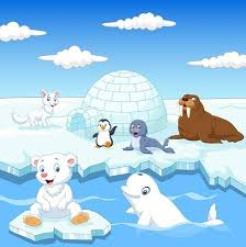 Image result for polar animals clipart
