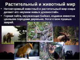 Растительный и животный мир Башкортостана реферат скачать Реферат на тему растительный мир башкирии