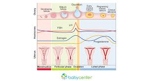 Typical Menstrual Cycle Chart How Your Menstrual Cycle Works Babycenter