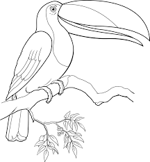 Small Picture Toucan Coloring Page Printable
