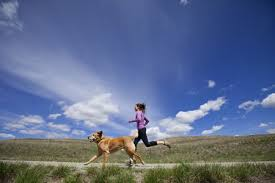 exercise for dogs keeping your dog fit